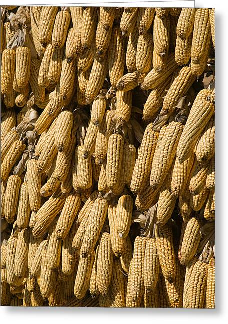 Corn On The Cob Greeting Cards - Corn Cobs Hanging To Dry, Baisha Greeting Card by Panoramic Images