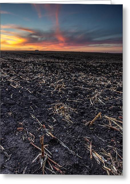 The Cornfield Greeting Cards - Corn Dusk Greeting Card by Aaron J Groen