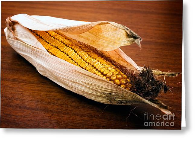 Corn ear Greeting Card by Sinisa Botas