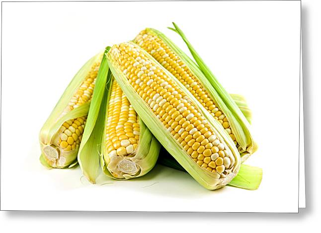Vegetables Greeting Cards - Corn ears on white background Greeting Card by Elena Elisseeva