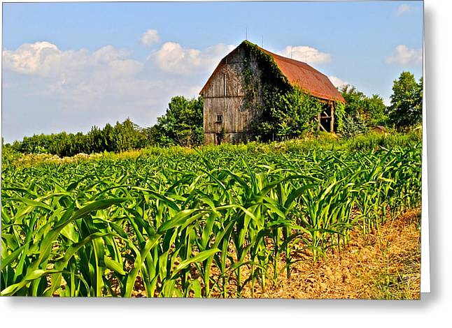 Corn Farm Greeting Card by Frozen in Time Fine Art Photography