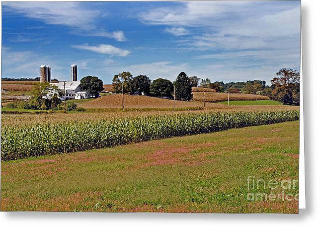 Amish Farms Greeting Cards - Corn Farmer Greeting Card by Skip Willits