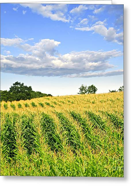 Meadow Photographs Greeting Cards - Corn field Greeting Card by Elena Elisseeva