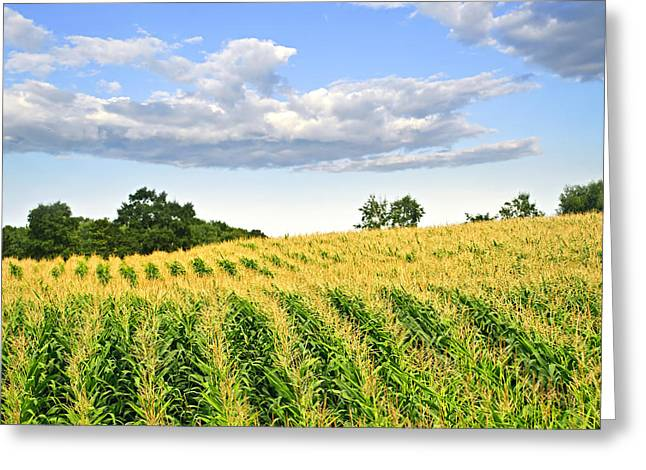 Corn field Greeting Card by Elena Elisseeva