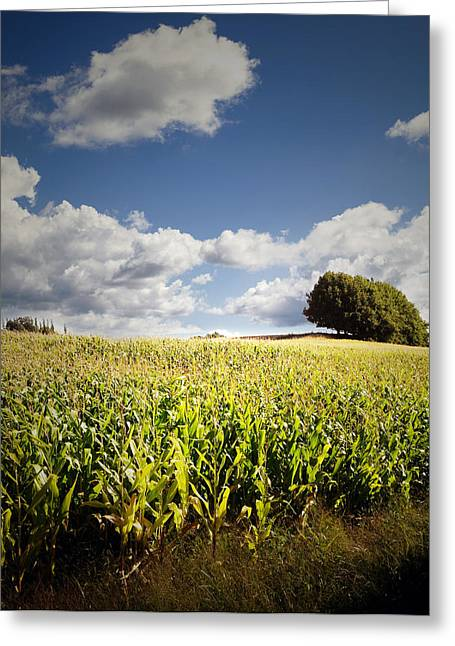 Farm Fresh Greeting Cards - Corn field Greeting Card by Les Cunliffe
