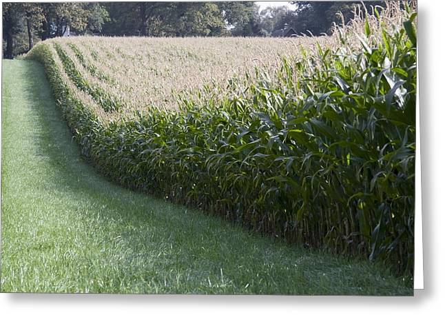 Erf Greeting Cards - Corn fields at High Farm estate in Arnhem Netherlands Greeting Card by Ronald Jansen