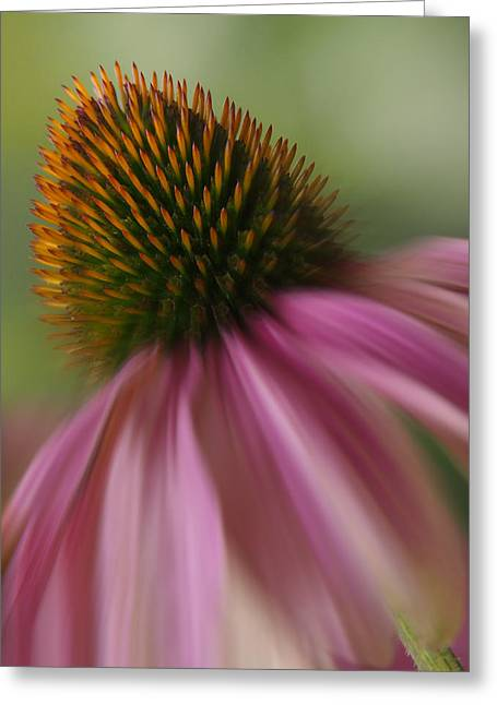 Corn Greeting Cards - Corn Flower Greeting Card by Mike McGlothlen