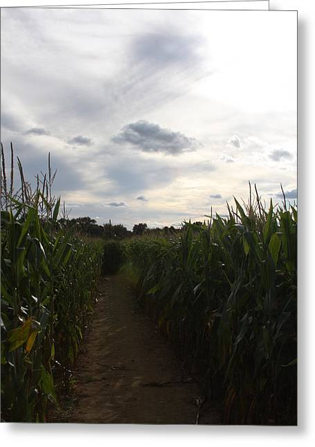 Corn Maze Greeting Cards - Corn Maze Greeting Card by Vadim Levin
