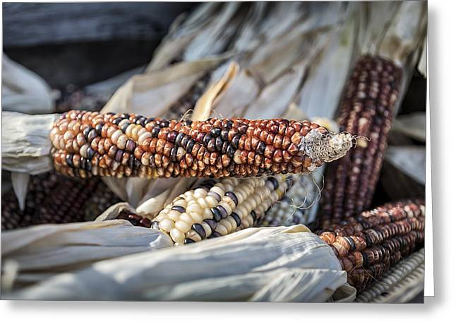 Farm Stand Greeting Cards - Corn of Many Colors Greeting Card by Caitlyn  Grasso