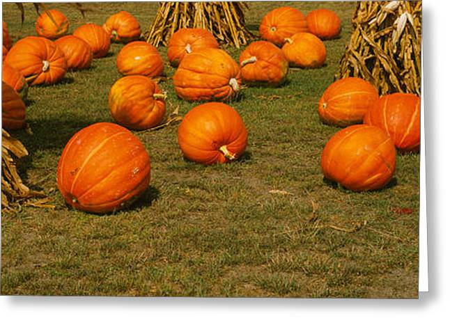 Halloween Scene Greeting Cards - Corn Plants With Pumpkins In A Field Greeting Card by Panoramic Images