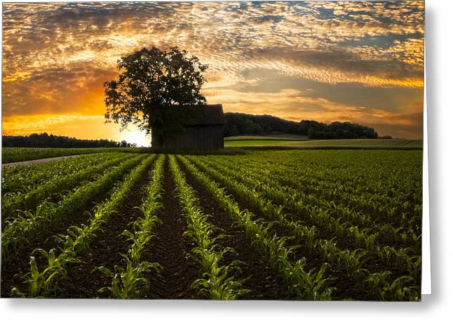 Best Sellers -  - Swiss Photographs Greeting Cards - Corn Rows Greeting Card by Debra and Dave Vanderlaan