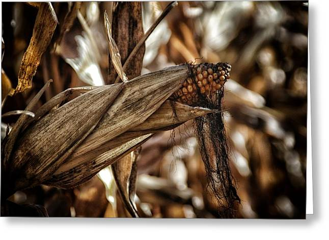 Agronomy Greeting Cards - Corn Silk Greeting Card by Todd and candice Dailey