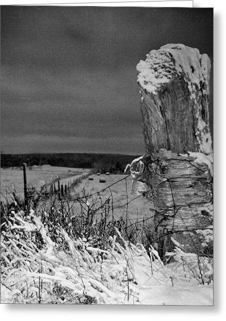 Birch Tree Drawings Greeting Cards - Corner post Greeting Card by David Walsh