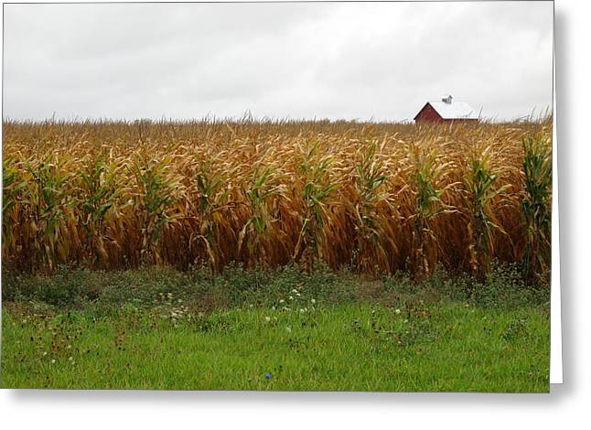 Cornfield Greeting Cards - Cornfield and Farmhouse Greeting Card by Frank Romeo