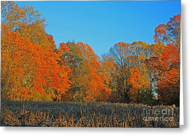 Tress Greeting Cards Greeting Cards - Cornfield Colors Greeting Card by Todd Breitling