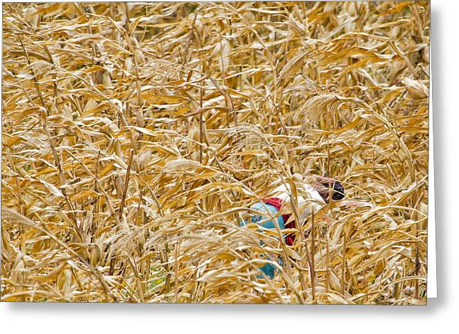 Planet Pyrography Greeting Cards - Cornfield in Tanzania Greeting Card by Lucas Guardincerri