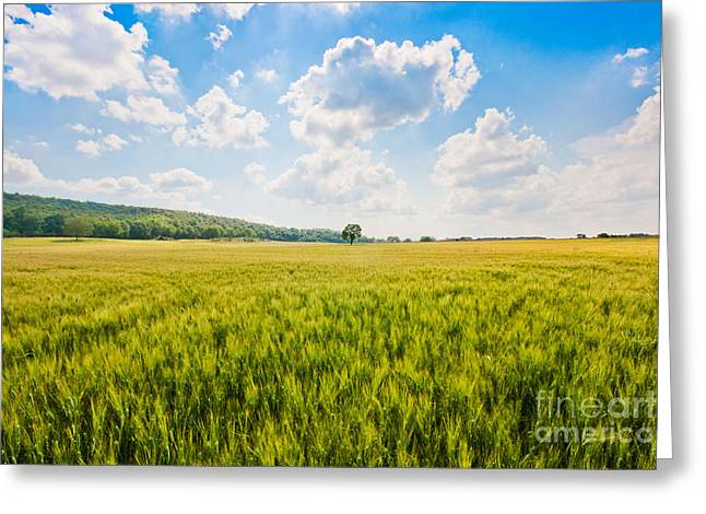 Tuscan Hills Photographs Greeting Cards - Cornfield in Tuscany Greeting Card by JR Photography