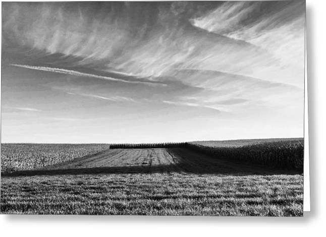 Cornfields Greeting Cards - Cornfield Shadow Greeting Card by Wim Lanclus