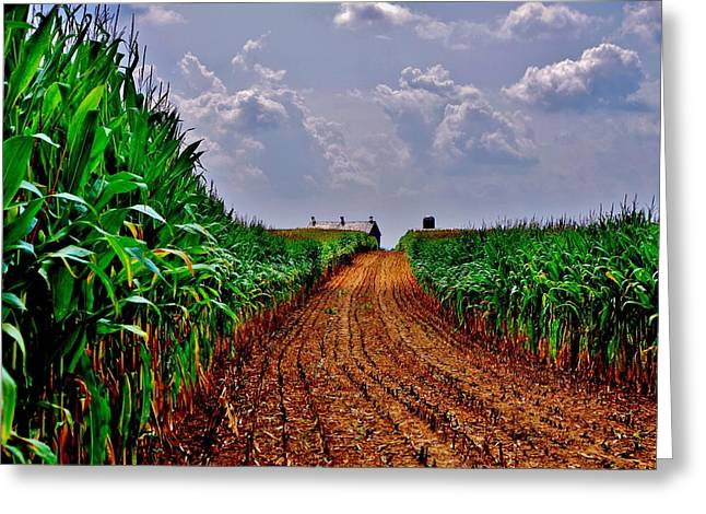 Cornfield Greeting Cards - Cornfield Skies Greeting Card by Robert Geary