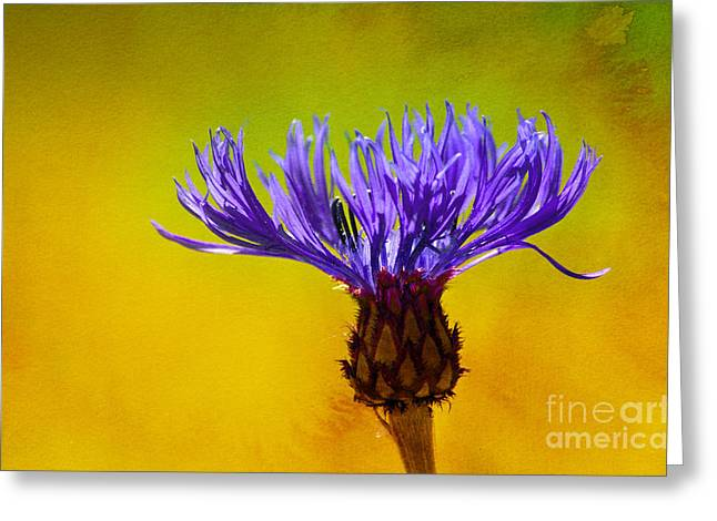 Textured Floral Mixed Media Greeting Cards - Cornflower Composing Greeting Card by Lutz Baar
