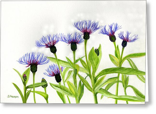 Cornflowers Greeting Card by Sharon Freeman