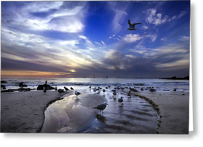Corona Greeting Cards - Corona del Mar Greeting Card by Sean Foster