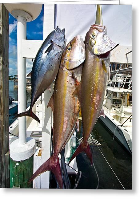 Fishing Boats Greeting Cards - Coronado fish and Tuna  Greeting Card by Manuel Lopez