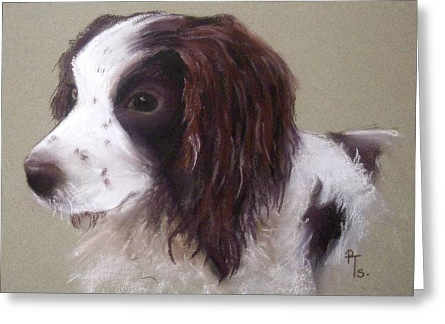 Spaniel Pastels Greeting Cards - Corrie Greeting Card by Rosemarie Temple-Smith