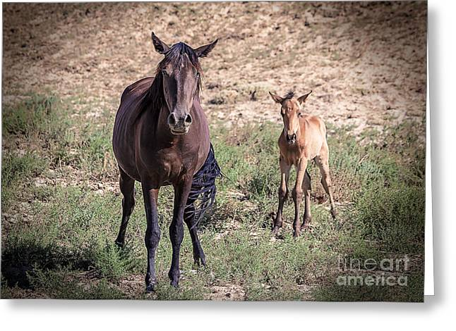 The Horse Greeting Cards - Cortez Colorado Mustangs Greeting Card by Janice Rae Pariza