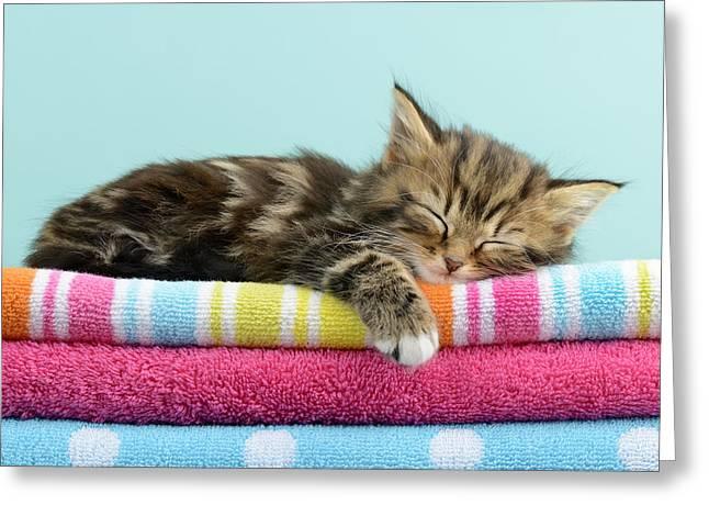 Asleep Greeting Cards - Cosiness Greeting Card by Greg Cuddiford
