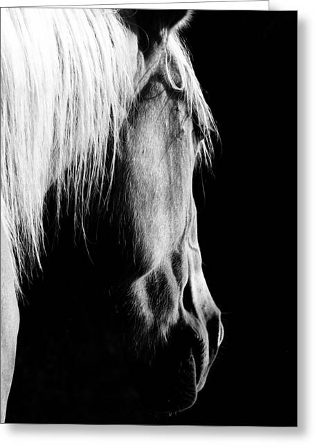 Quarter Horses Greeting Cards - Cosmo Greeting Card by Julie Refer
