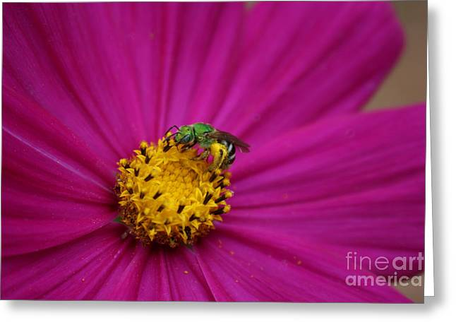 Photograph Greeting Cards - Cosmo with Green Wasp Greeting Card by Cheryl Aguiar