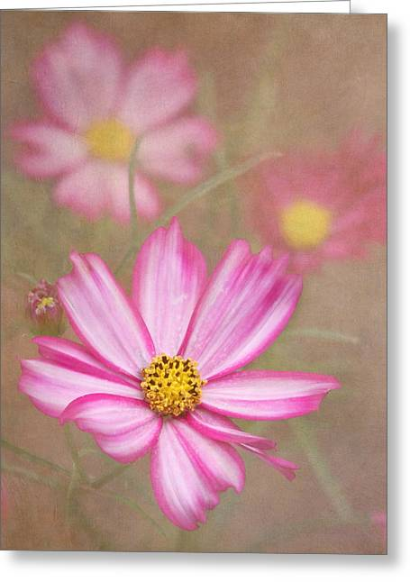 Textured Floral Greeting Cards - Cosmos Greeting Card by Angie Vogel