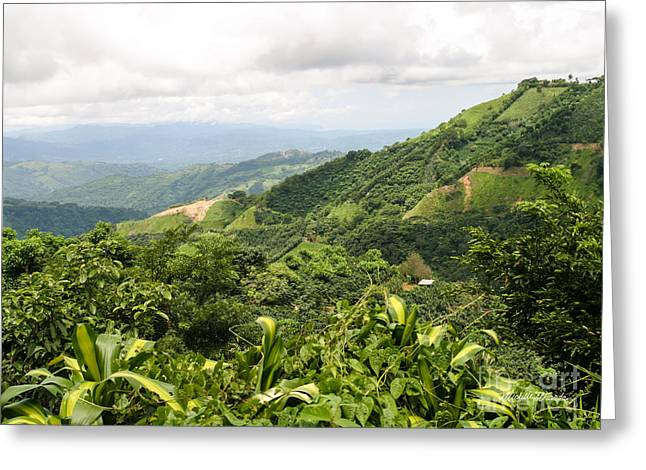 Costa Greeting Cards - Costa Rican Coffee Greeting Card by Michelle Wiarda