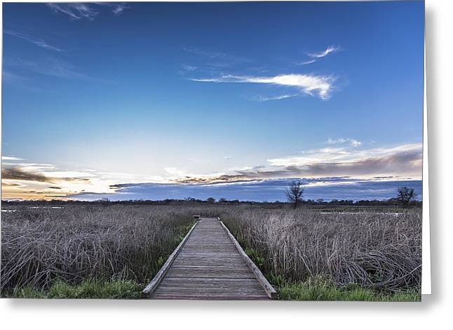 Galt Greeting Cards - Cosumnes River Preserve Greeting Card by Lee Harland