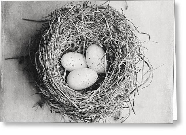 Lisa Russo Greeting Cards - Cottage Birds Nest in Black and White Greeting Card by Lisa Russo