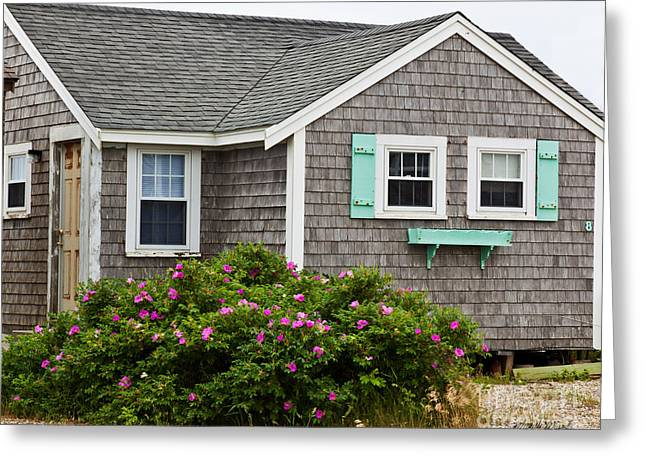 Beach Roses Greeting Cards - Cottage on the Cape Greeting Card by Michelle Wiarda