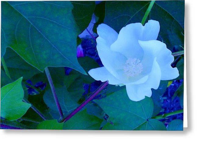 Cotton Blossom Greeting Card by Eloise Schneider