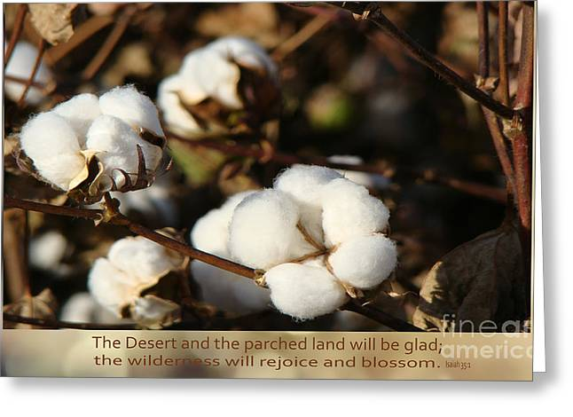 Ready For Harvest Greeting Cards - Cotton Bolls Ready for Harvest Greeting Card by Beverly Guilliams