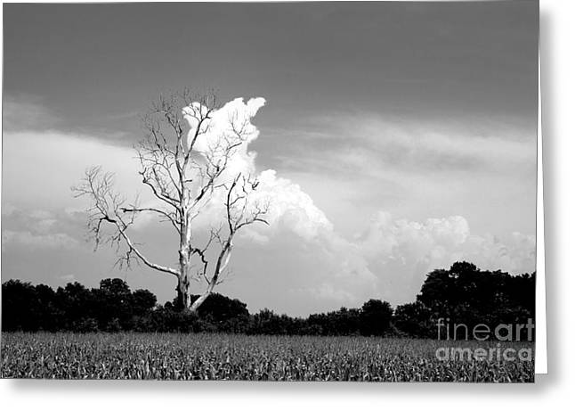 Bare Trees Greeting Cards - Cotton Candy Tree - Clarksdale Mississippi Greeting Card by T Lowry Wilson