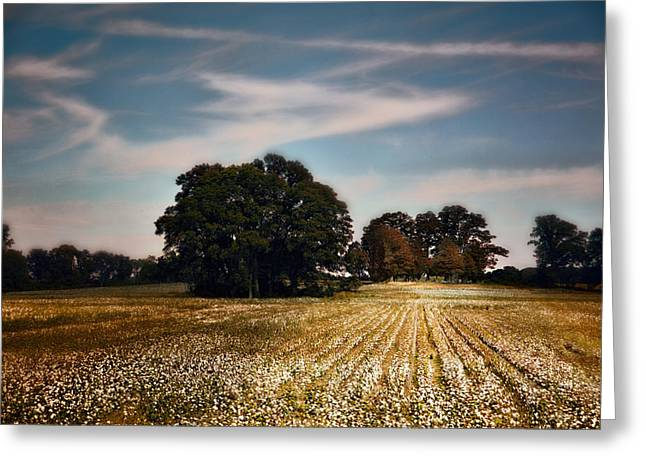 Autumn In The Country Greeting Cards - Cotton Field Cemetery Greeting Card by Jai Johnson
