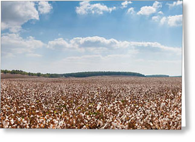 Cloth Greeting Cards - Cotton field Greeting Card by Guy Zidel