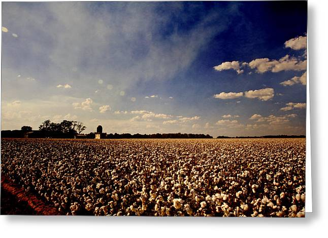 Cotton Field Greeting Card by Scott Pellegrin