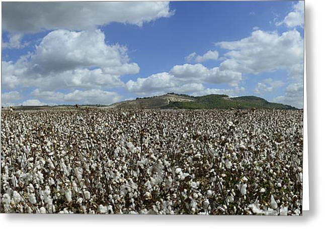 Cloth Greeting Cards - Cotton Fields Forever Greeting Card by Arik Baltinester