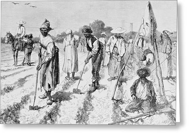 African American Art Drawings Greeting Cards - Cotton Plantation Greeting Card by Edwin Austin Abbey
