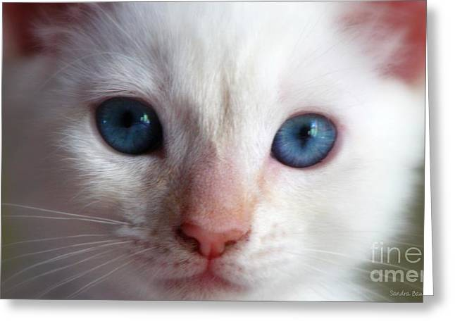 Kitten Prints Greeting Cards - Cotton Greeting Card by Sandra Bauser Digital Art