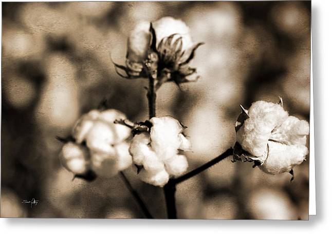 Boll Greeting Cards - Cotton Greeting Card by Scott Pellegrin
