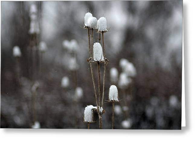 Snow Scene Digital Greeting Cards - Cotton Tops Greeting Card by Gothicolors Donna Snyder