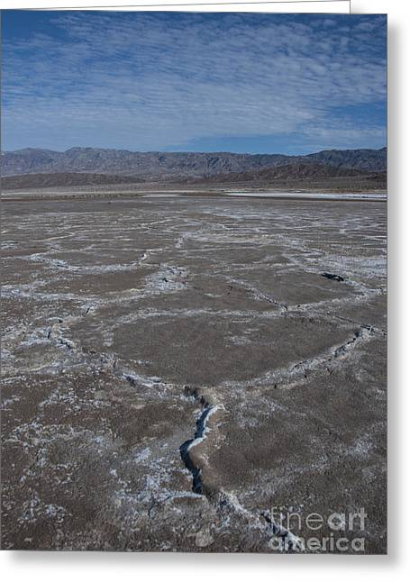 Basin Park Greeting Cards - Cottonball Basin at Death Valley Greeting Card by Juli Scalzi