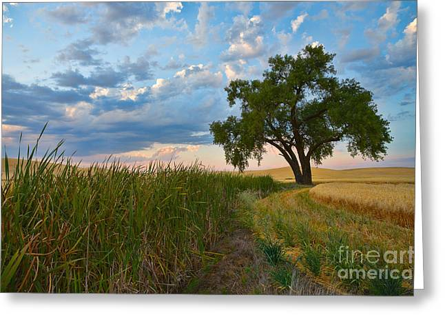 Pm Greeting Cards - Cottonwood 1 Greeting Card by Don Hall